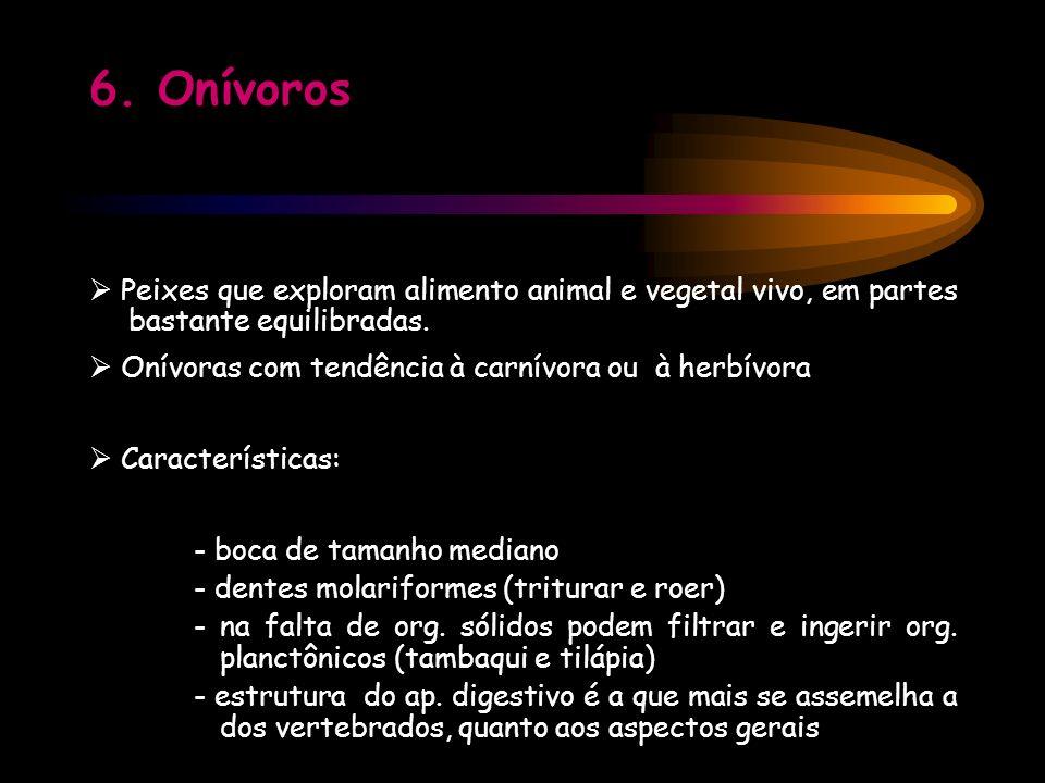 6. Onívoros  Peixes que exploram alimento animal e vegetal vivo, em partes bastante equilibradas.
