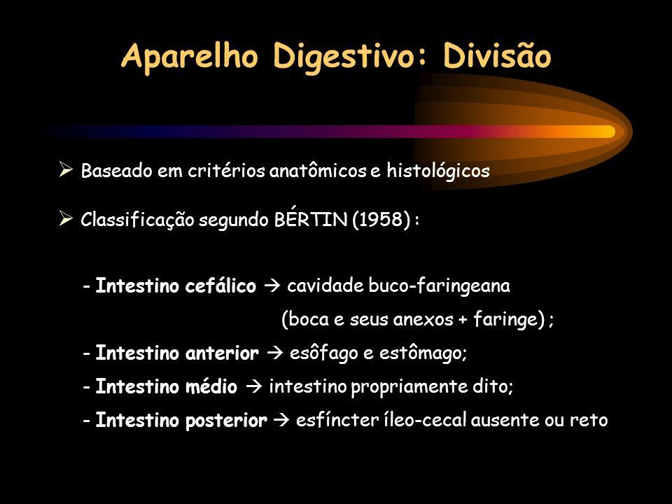 Aparelho Digestivo: Divisão