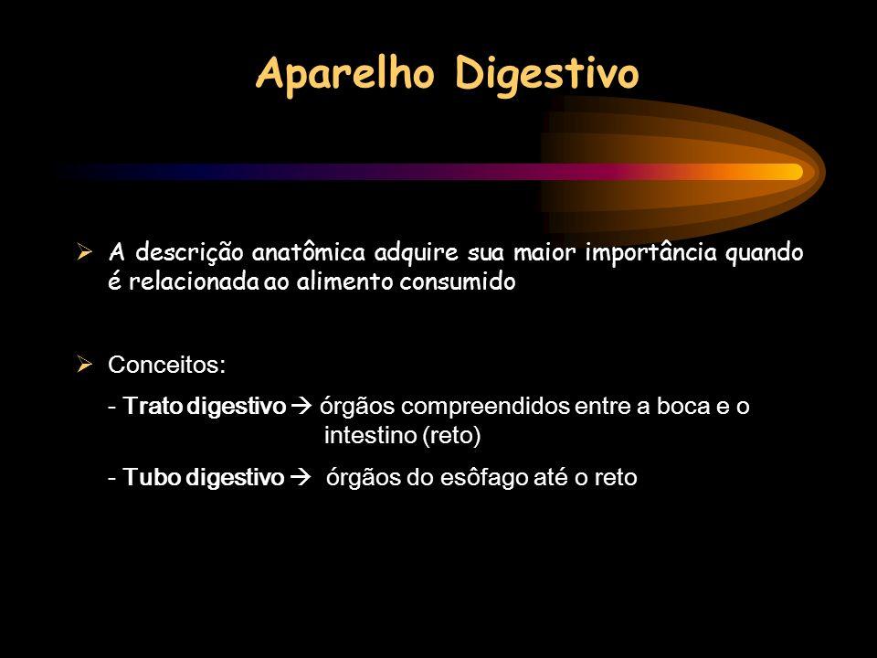 Aparelho Digestivo A descrição anatômica adquire sua maior importância quando é relacionada ao alimento consumido.