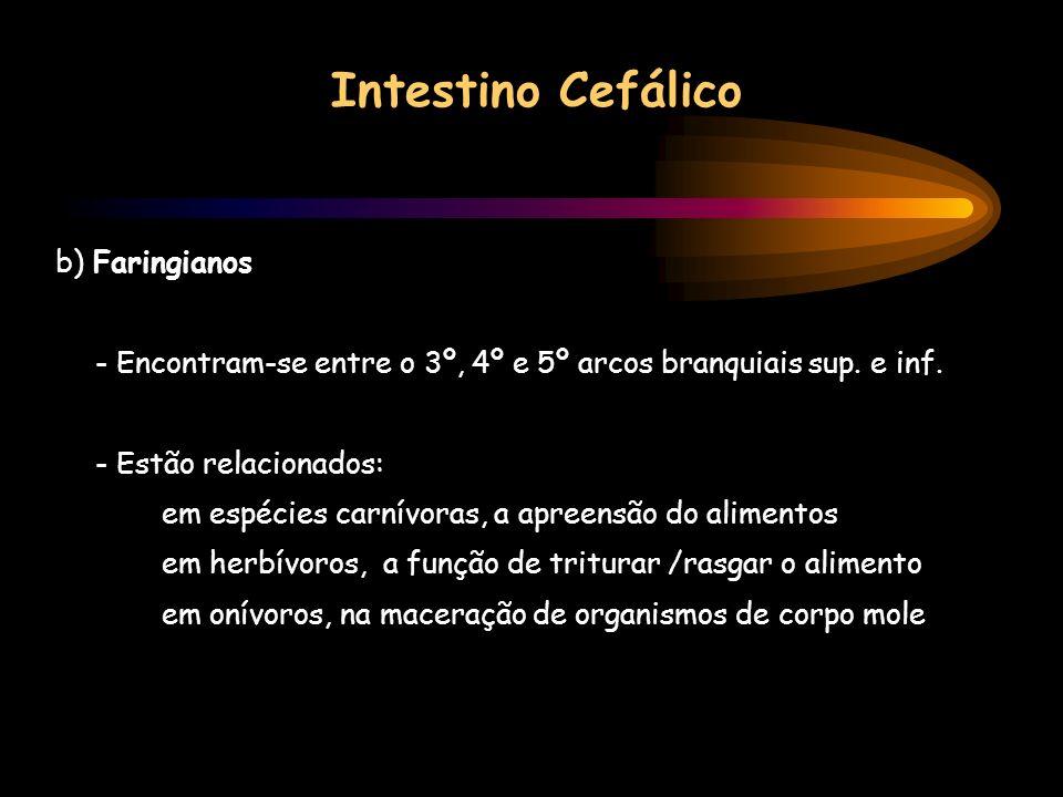 Intestino Cefálico b) Faringianos