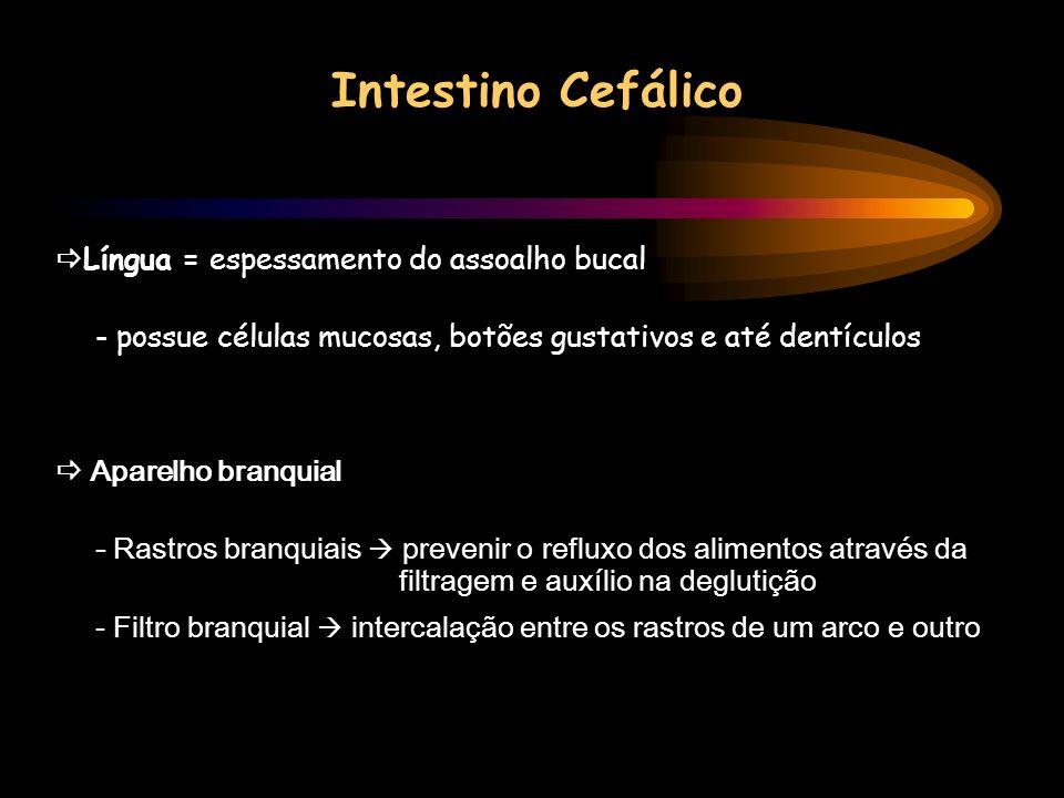 Intestino Cefálico Língua = espessamento do assoalho bucal