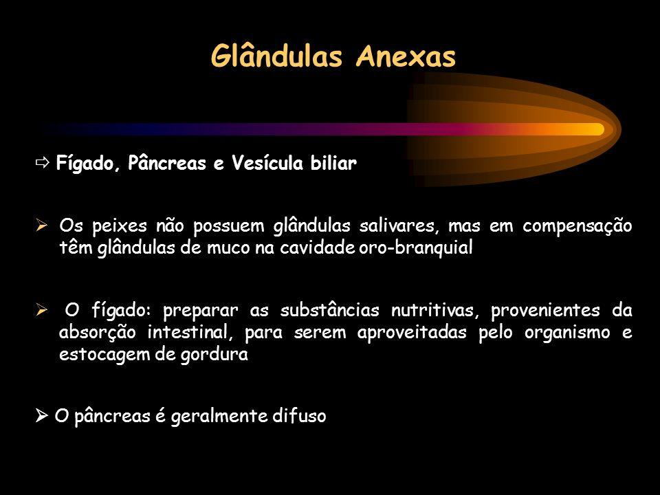 Glândulas Anexas  Fígado, Pâncreas e Vesícula biliar