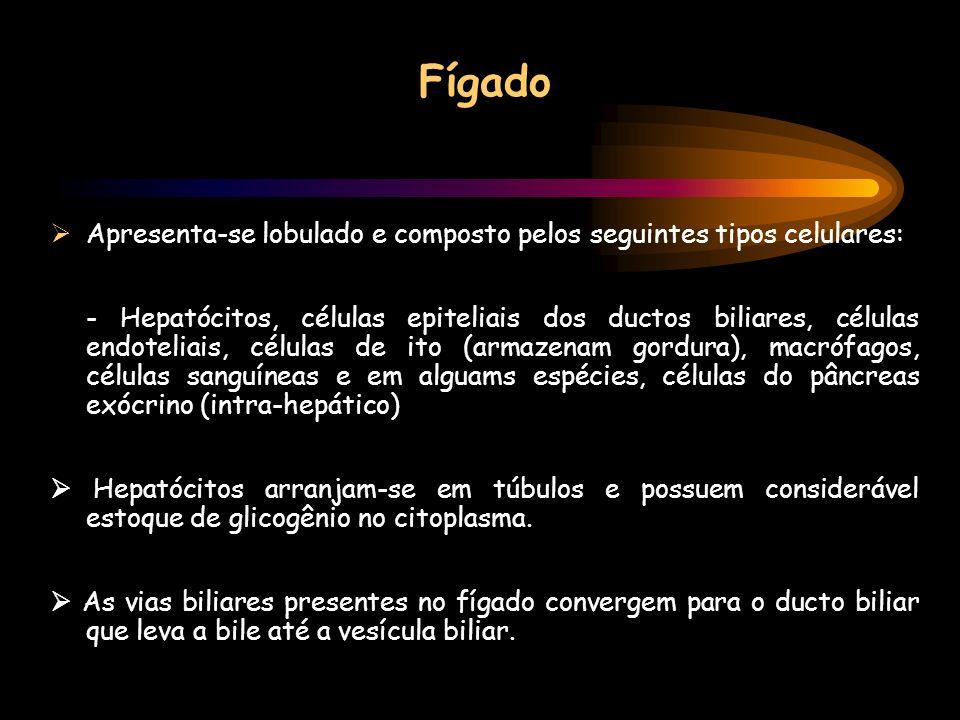 Fígado Apresenta-se lobulado e composto pelos seguintes tipos celulares: