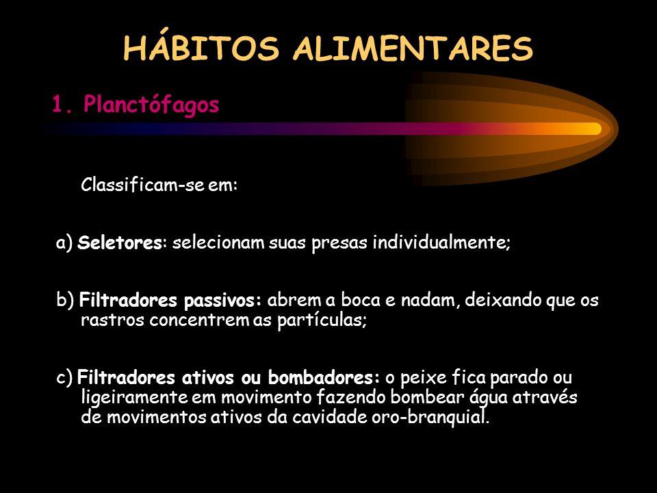 HÁBITOS ALIMENTARES 1. Planctófagos