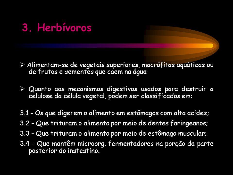 3. Herbívoros  Alimentam-se de vegetais superiores, macrófitas aquáticas ou de frutos e sementes que caem na água.