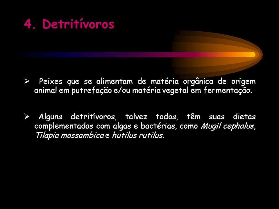 4. Detritívoros  Peixes que se alimentam de matéria orgânica de origem animal em putrefação e/ou matéria vegetal em fermentação.
