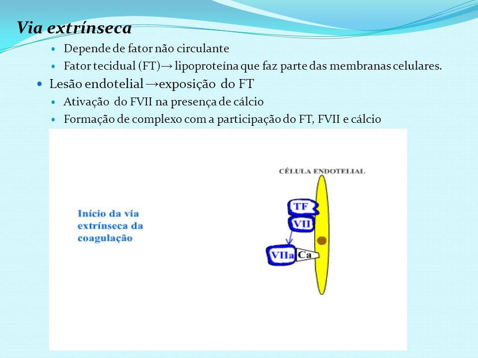 Via extrínseca Lesão endotelial →exposição do FT