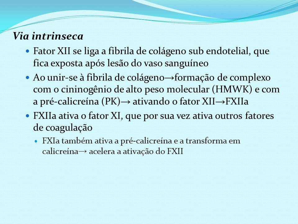 Via intrinsecaFator XII se liga a fibrila de colágeno sub endotelial, que fica exposta após lesão do vaso sanguíneo.