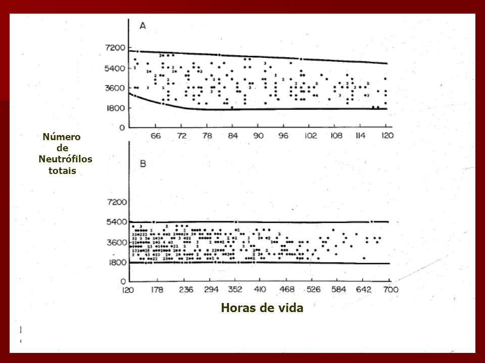 Número de Neutrófilos totais Horas de vida