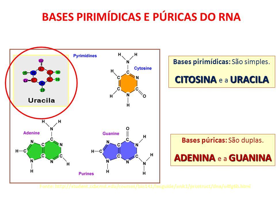 BASES PIRIMÍDICAS E PÚRICAS DO RNA