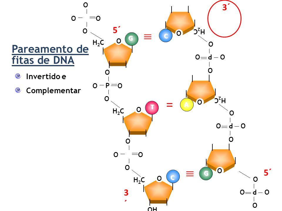  =  Pareamento de fitas de DNA 5´ 3´ Invertido e Complementar OH C G