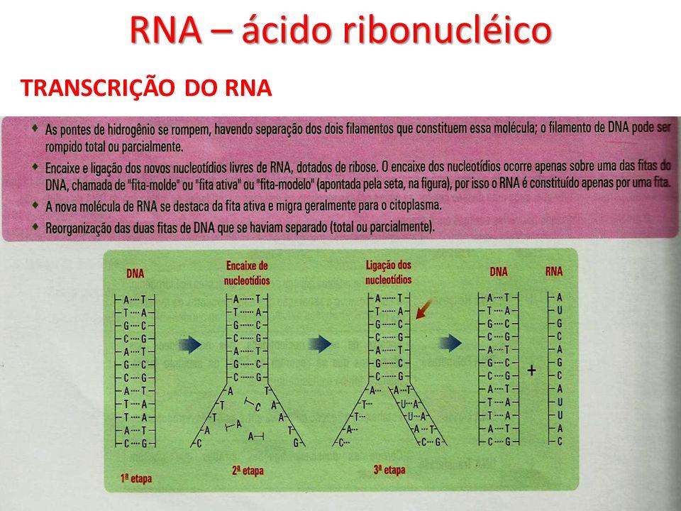 RNA – ácido ribonucléico