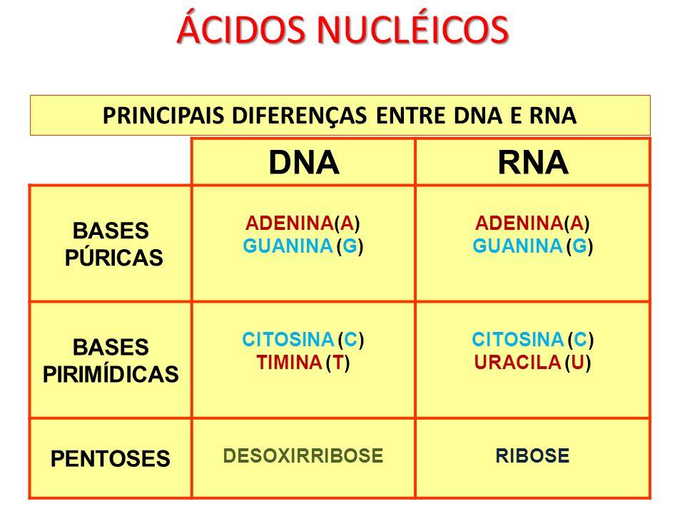 PRINCIPAIS DIFERENÇAS ENTRE DNA E RNA
