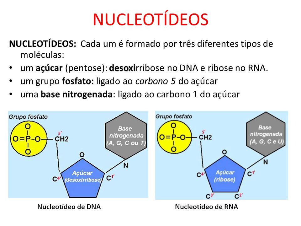 NUCLEOTÍDEOSNUCLEOTÍDEOS: Cada um é formado por três diferentes tipos de moléculas: um açúcar (pentose): desoxirribose no DNA e ribose no RNA.