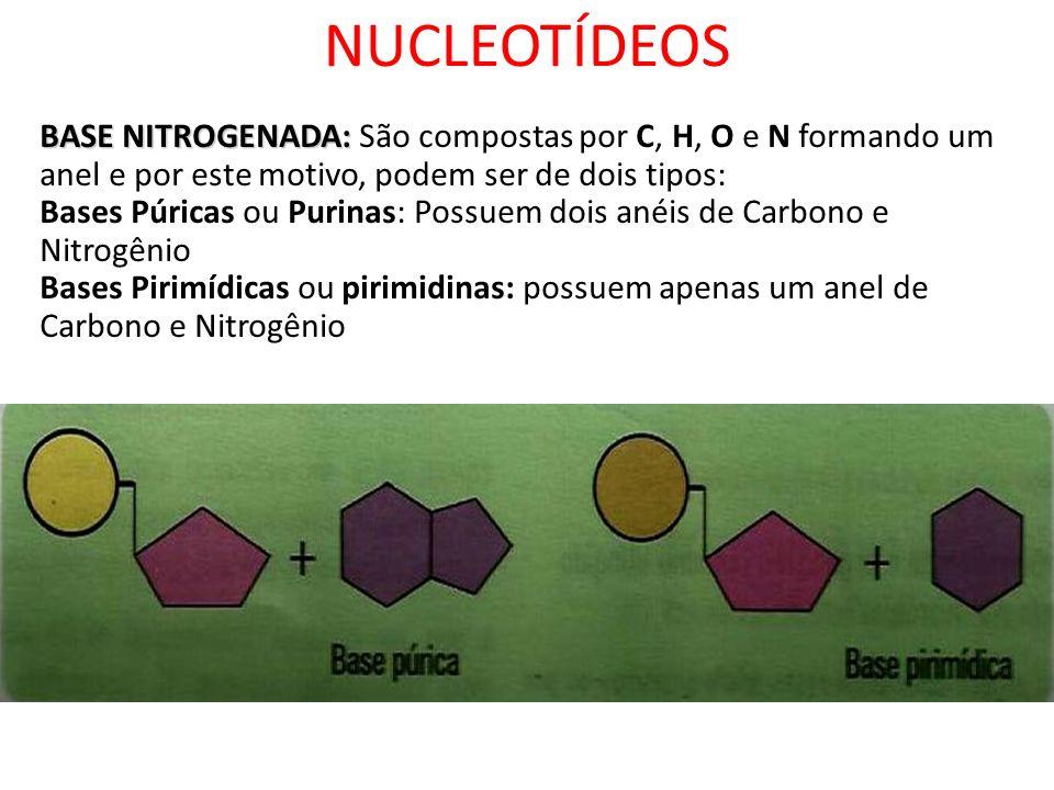 NUCLEOTÍDEOSBASE NITROGENADA: São compostas por C, H, O e N formando um anel e por este motivo, podem ser de dois tipos: