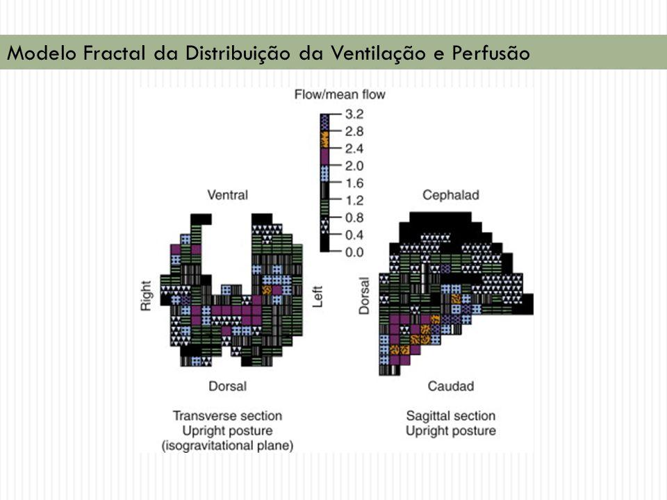 Modelo Fractal da Distribuição da Ventilação e Perfusão