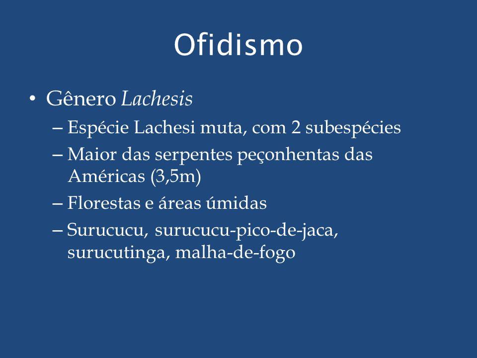 Ofidismo Gênero Lachesis Espécie Lachesi muta, com 2 subespécies