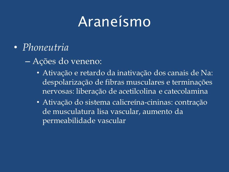 Araneísmo Phoneutria Ações do veneno: