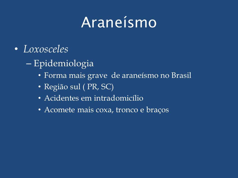 Araneísmo Loxosceles Epidemiologia