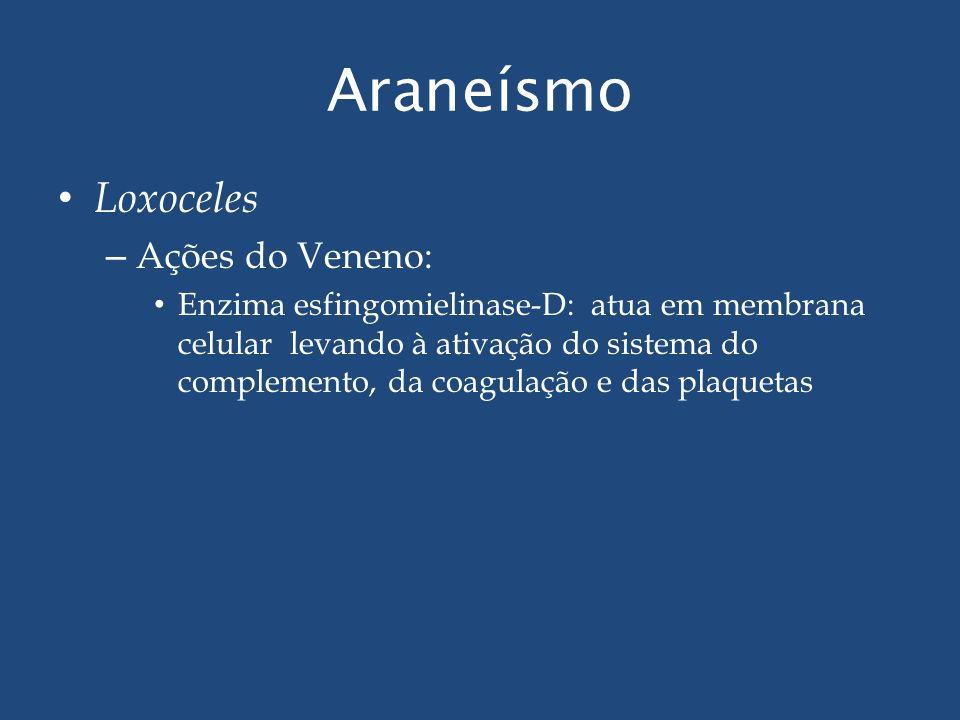 Araneísmo Loxoceles Ações do Veneno: