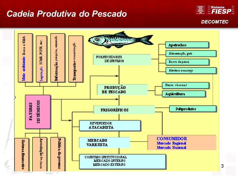 Cadeia Produtiva do Pescado