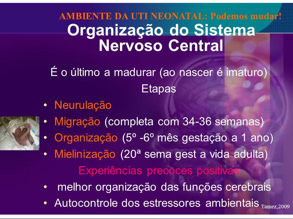 Organização do Sistema Nervoso Central