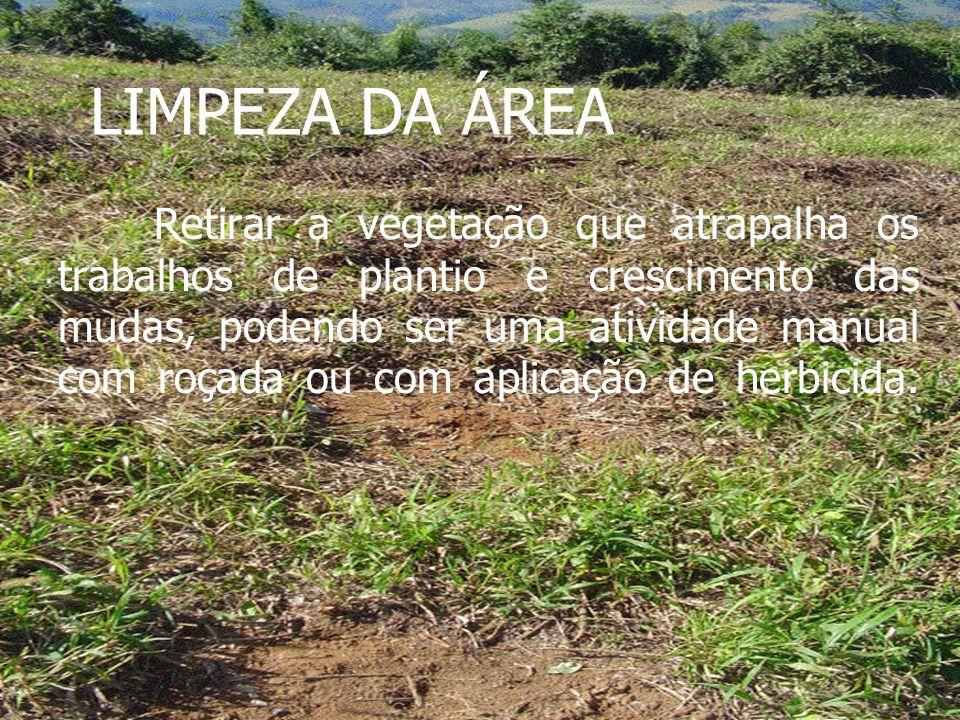 LIMPEZA DA ÁREA