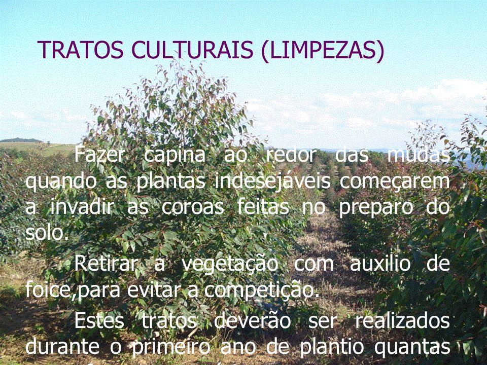 TRATOS CULTURAIS (LIMPEZAS)