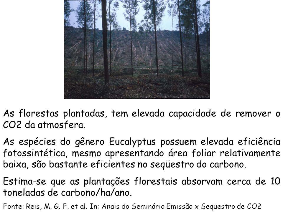 As florestas plantadas, tem elevada capacidade de remover o CO2 da atmosfera.