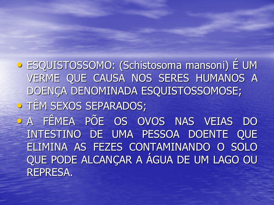 ESQUISTOSSOMO: (Schistosoma mansoni) É UM VERME QUE CAUSA NOS SERES HUMANOS A DOENÇA DENOMINADA ESQUISTOSSOMOSE;