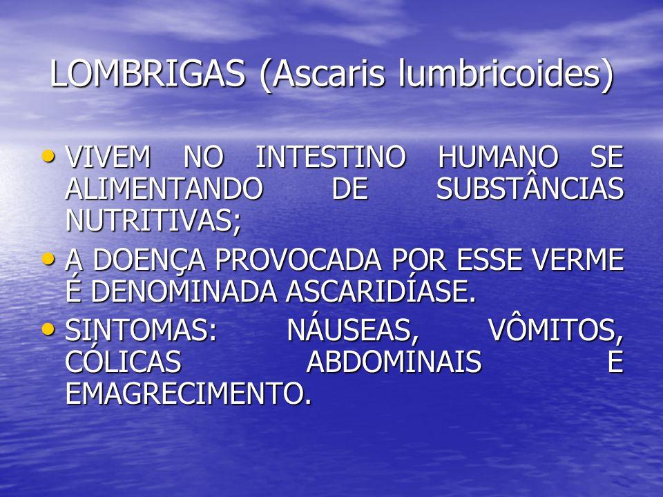 LOMBRIGAS (Ascaris lumbricoides)