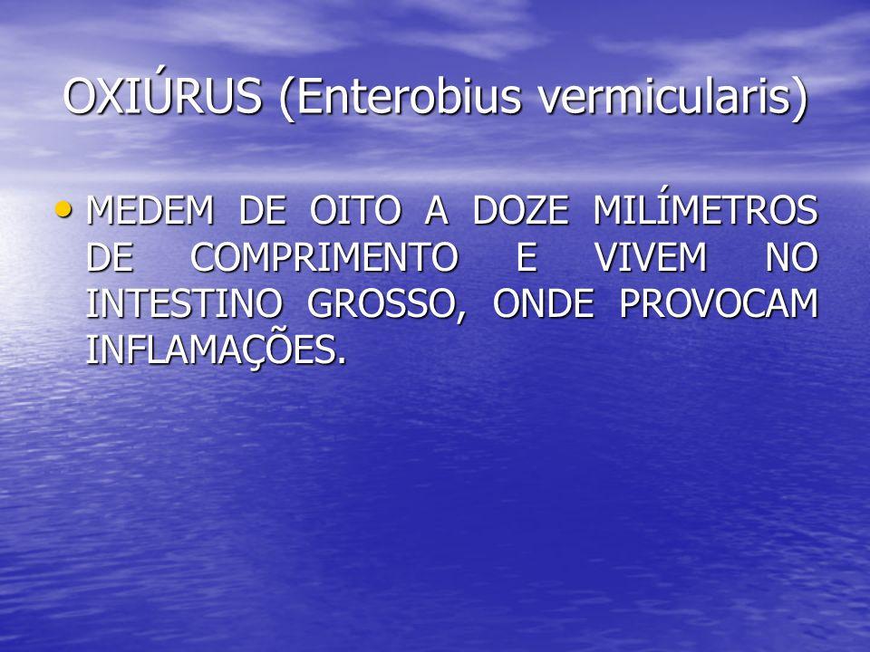 OXIÚRUS (Enterobius vermicularis)