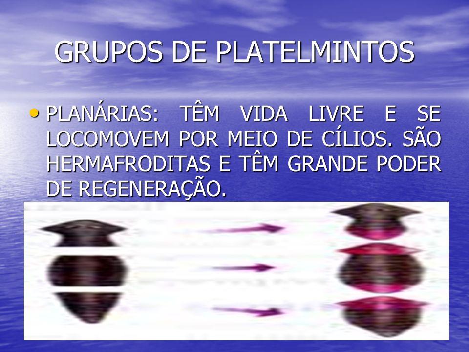 GRUPOS DE PLATELMINTOS