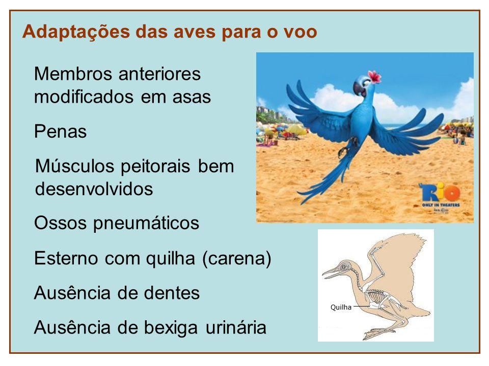 Adaptações das aves para o voo