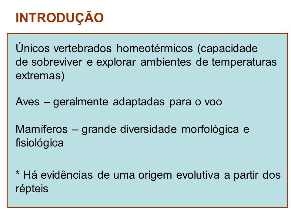 INTRODUÇÃO Únicos vertebrados homeotérmicos (capacidade