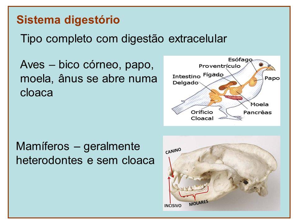 Sistema digestório Tipo completo com digestão extracelular. Aves – bico córneo, papo, moela, ânus se abre numa.