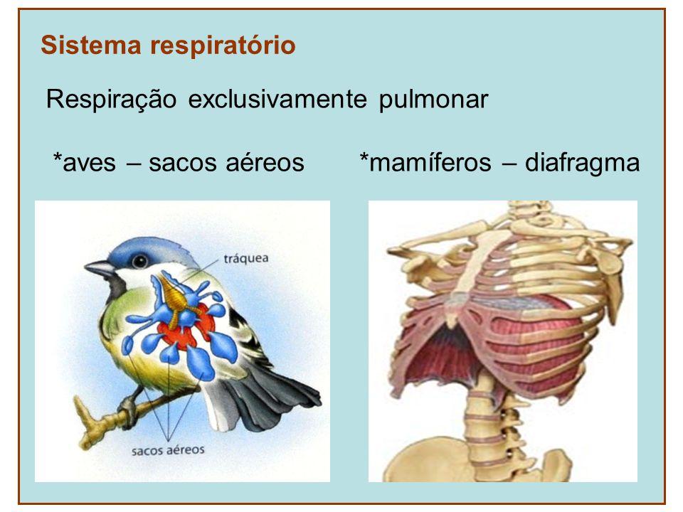 Sistema respiratório Respiração exclusivamente pulmonar *aves – sacos aéreos *mamíferos – diafragma