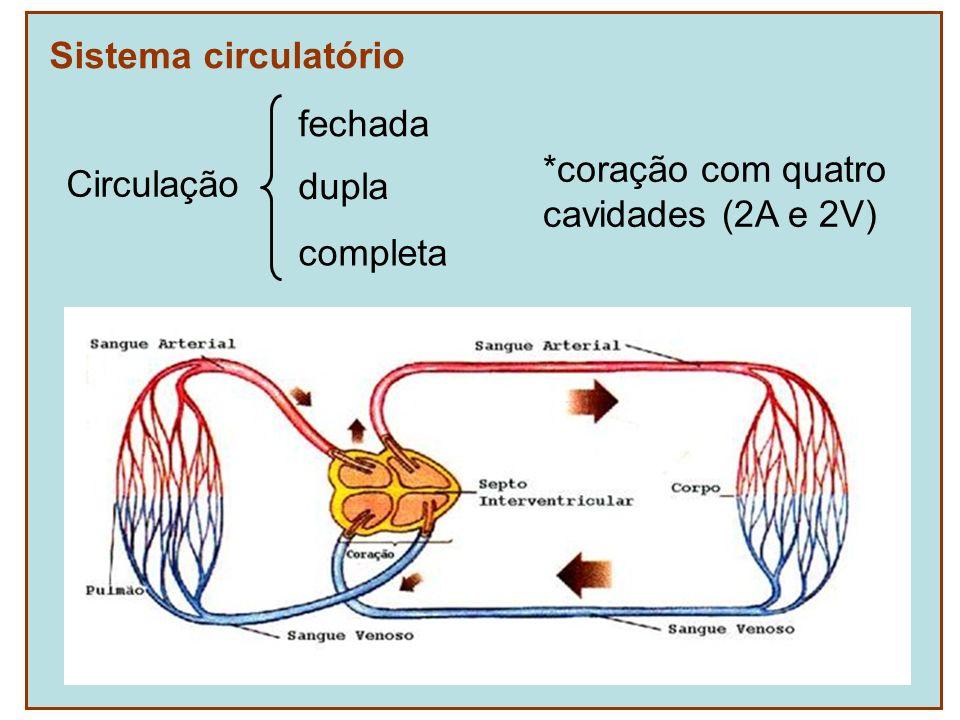Sistema circulatório Circulação fechada *coração com quatro cavidades (2A e 2V) dupla completa