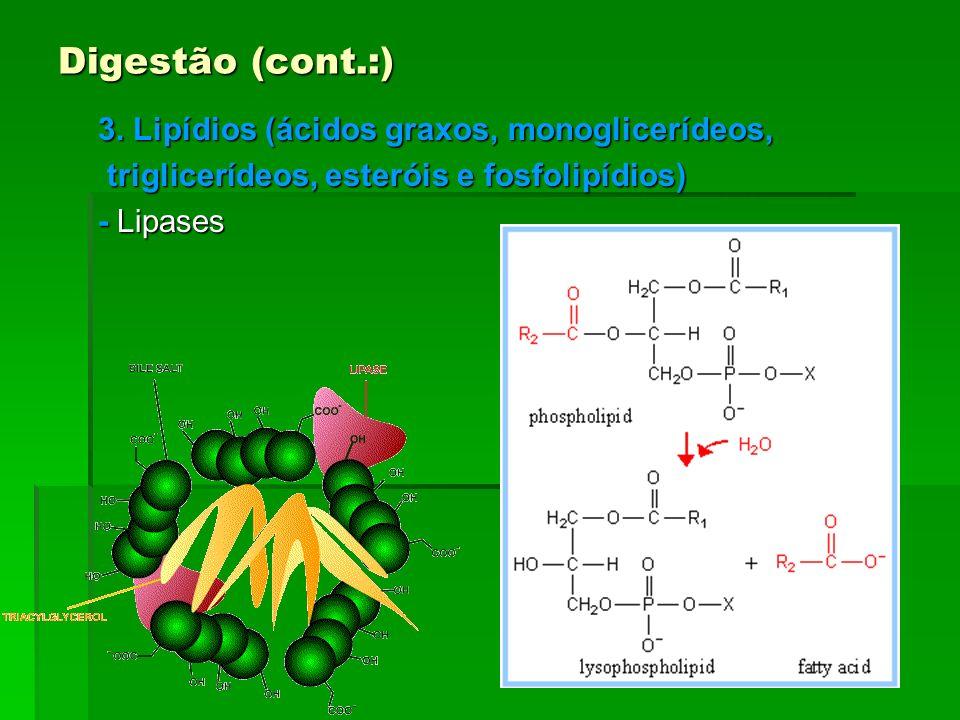 Digestão (cont.:) 3. Lipídios (ácidos graxos, monoglicerídeos,