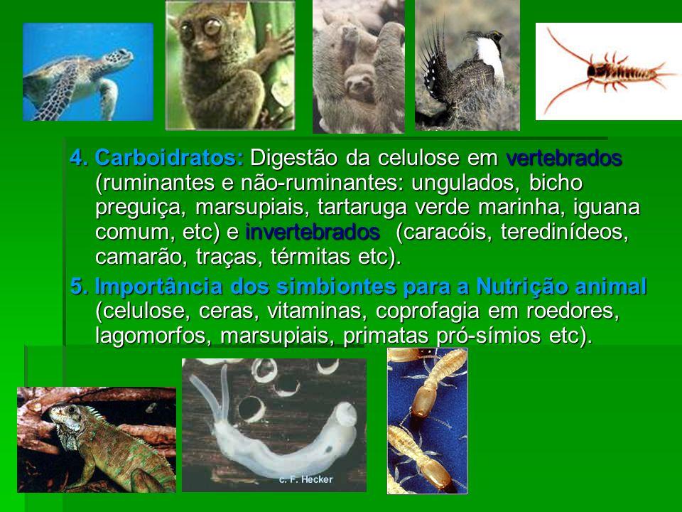 4. Carboidratos: Digestão da celulose em vertebrados (ruminantes e não-ruminantes: ungulados, bicho preguiça, marsupiais, tartaruga verde marinha, iguana comum, etc) e invertebrados (caracóis, teredinídeos, camarão, traças, térmitas etc).