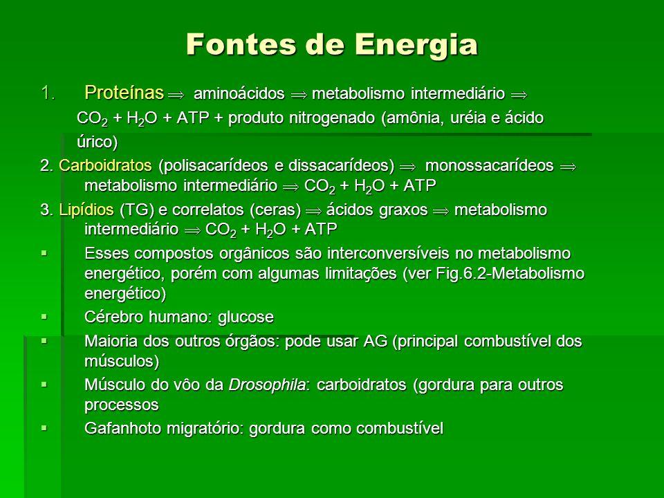Fontes de Energia Proteínas  aminoácidos  metabolismo intermediário  CO2 + H2O + ATP + produto nitrogenado (amônia, uréia e ácido.