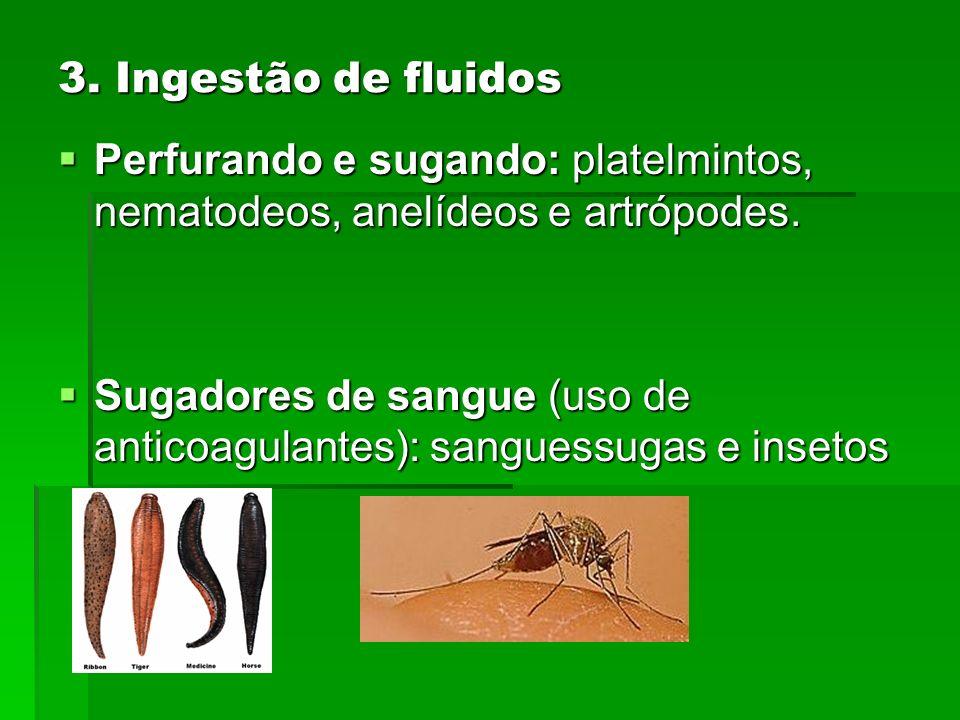 3. Ingestão de fluidos Perfurando e sugando: platelmintos, nematodeos, anelídeos e artrópodes.