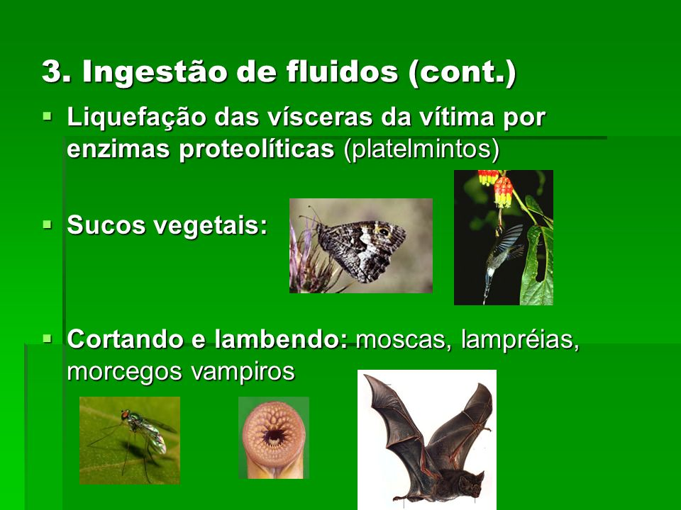 3. Ingestão de fluidos (cont.)