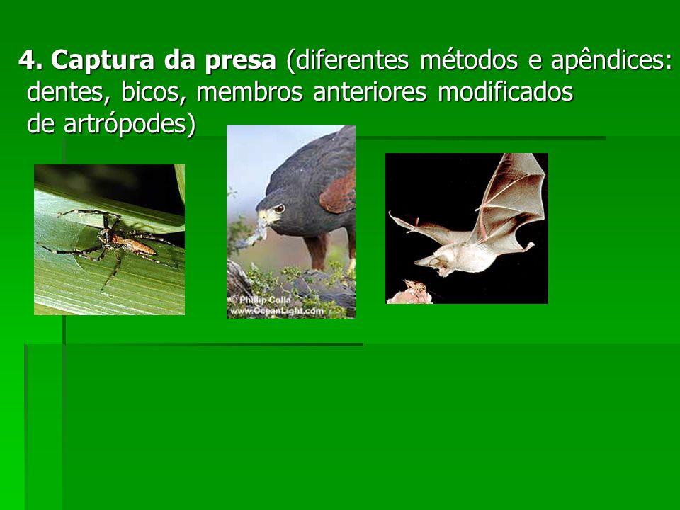 4. Captura da presa (diferentes métodos e apêndices: