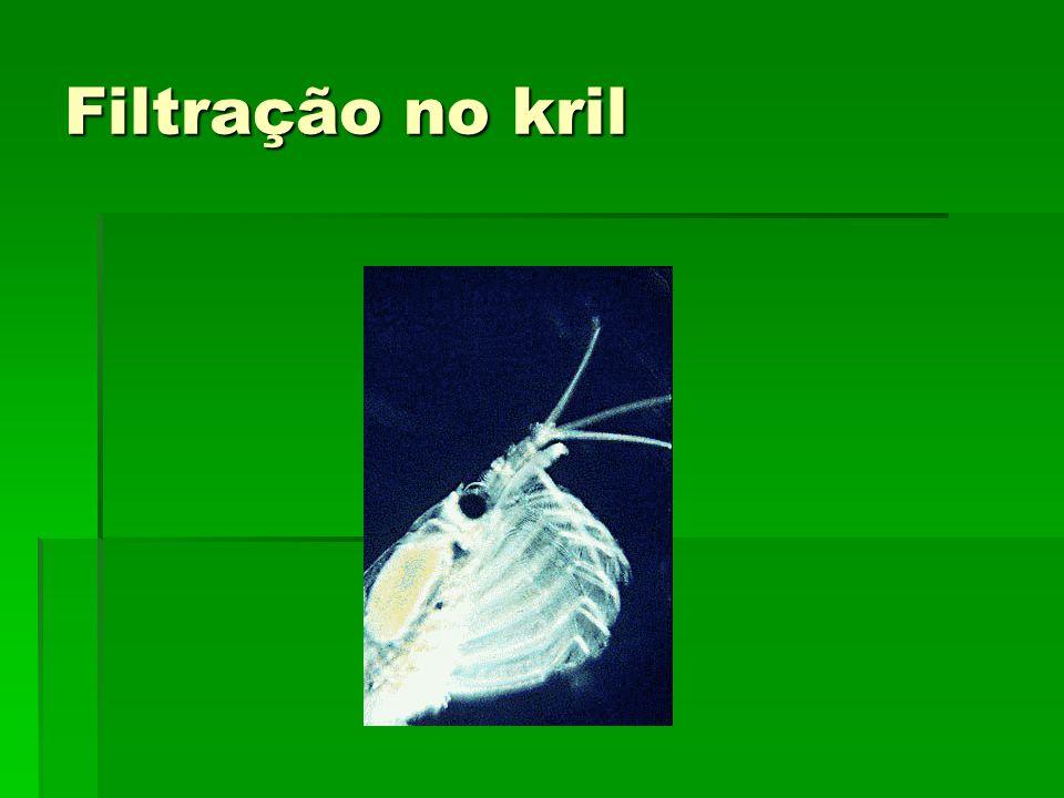 Filtração no kril