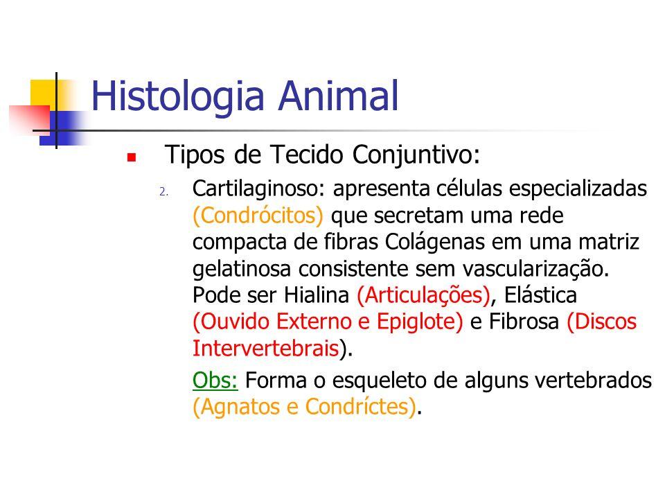 Histologia Animal Tipos de Tecido Conjuntivo: