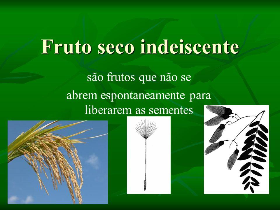 Fruto seco indeiscente