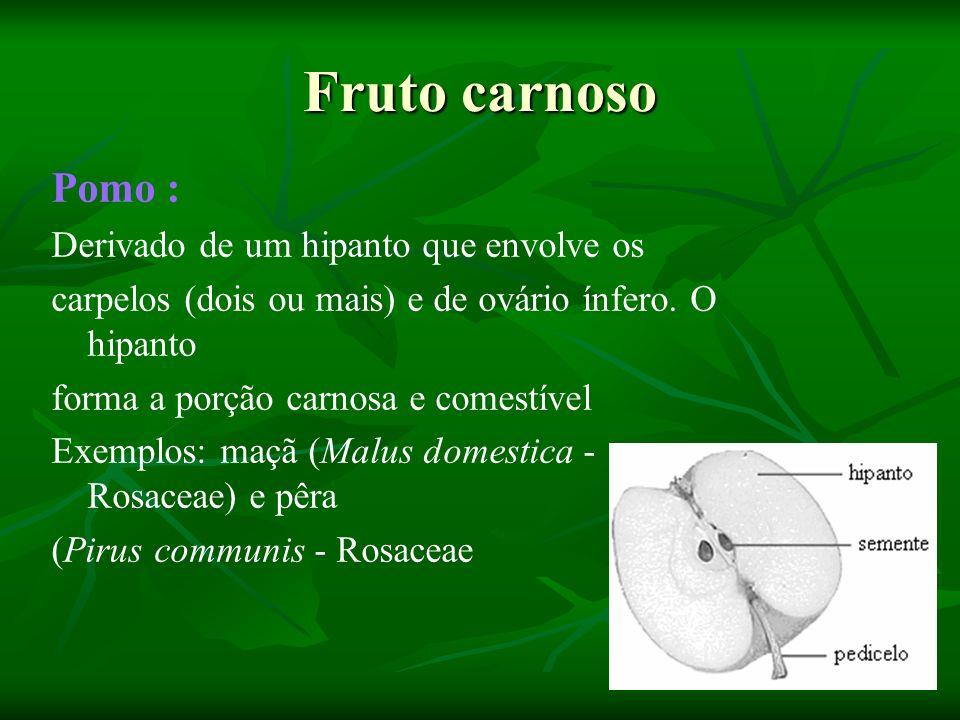 Fruto carnoso Pomo : Derivado de um hipanto que envolve os