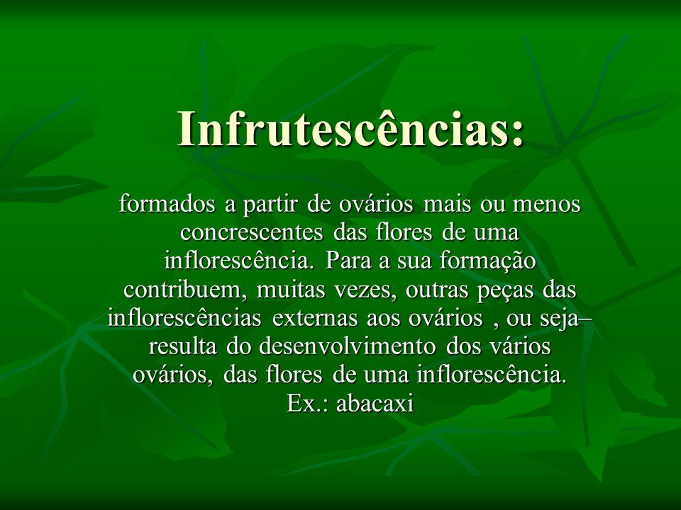 Infrutescências: