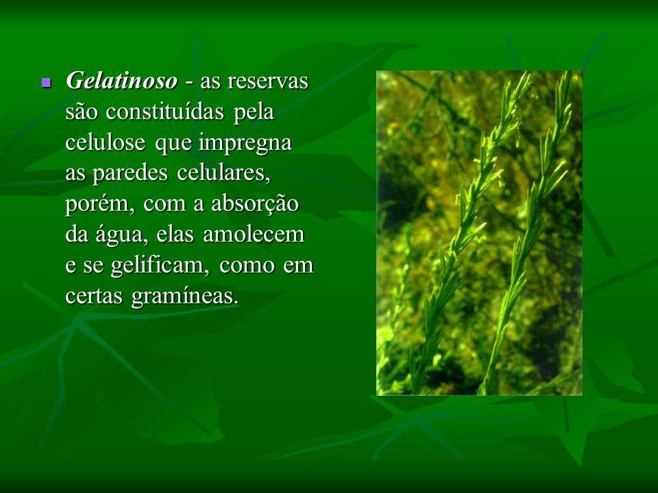 Gelatinoso - as reservas são constituídas pela celulose que impregna as paredes celulares, porém, com a absorção da água, elas amolecem e se gelificam, como em certas gramíneas.